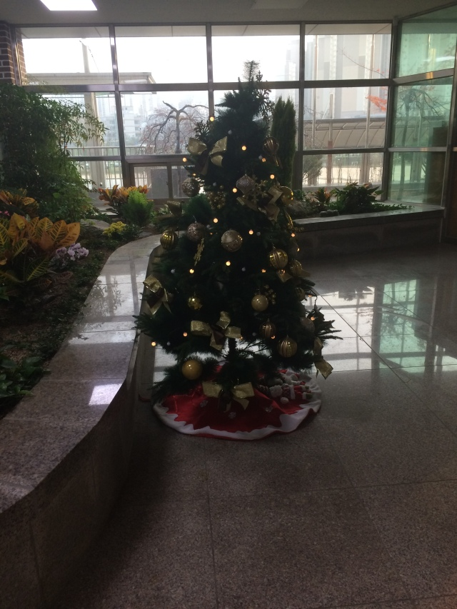 the Christmas tree at school